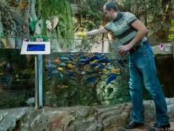 The Rainforest Exhibit's Piranhas Show No Inclination to Bare Their Teeth